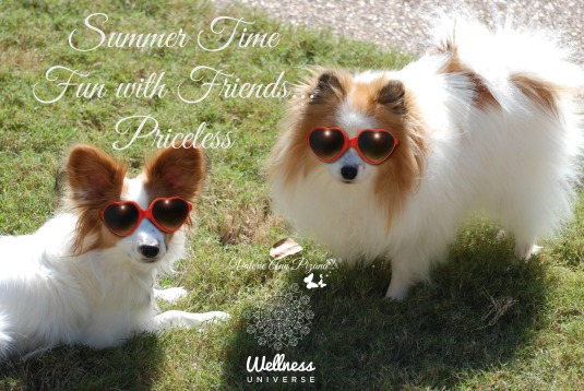 SummerTimeFriends